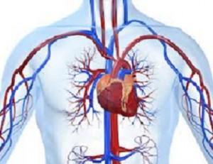 Ipertensione portale: cause e sintomi