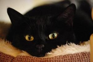 Ittero-nei-gatti,-cause-e-sintomi-principali-che-lo-comportano